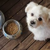 Why is Kibble better than home food?*
